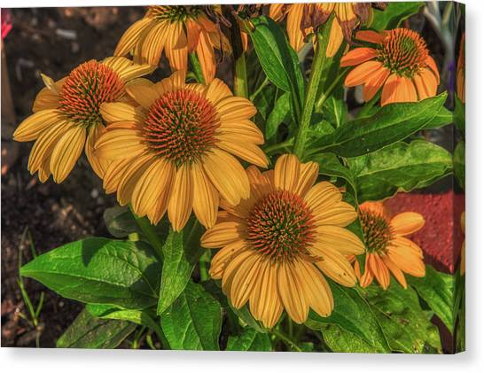 Canvas Print featuring the photograph Coneflowers  by Guy Whiteley