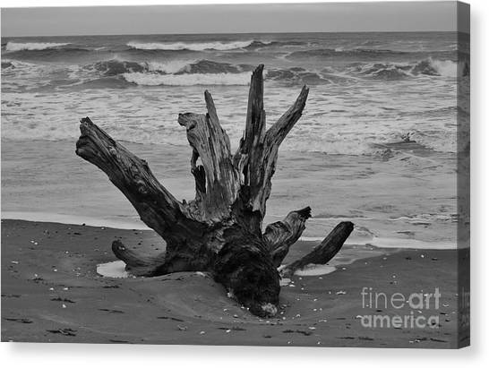 Canvas Print featuring the photograph Contrasting Textures by Jeni Gray