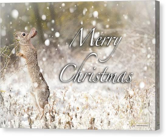 Conttontail Christmas Canvas Print