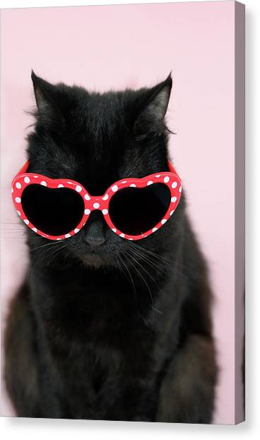 Cool Cat Wearing Sunglasses Canvas Print by Kelly Bowden
