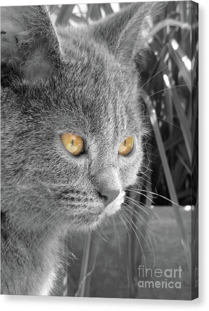 Chartreuxes Canvas Print - Copper Eyes by Elisabeth Lucas