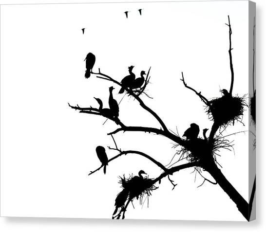 Cormorant's In Silhouette Canvas Print