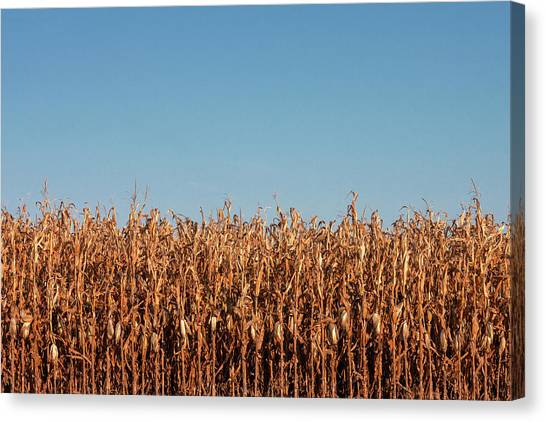 Corn Field Canvas Print - Corn And Sky by Todd Klassy