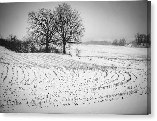 Corn Snow Canvas Print