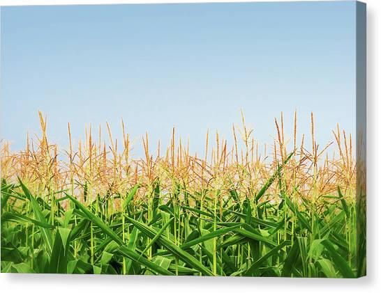 Corn Field Canvas Print - Corn Tassels by Todd Klassy