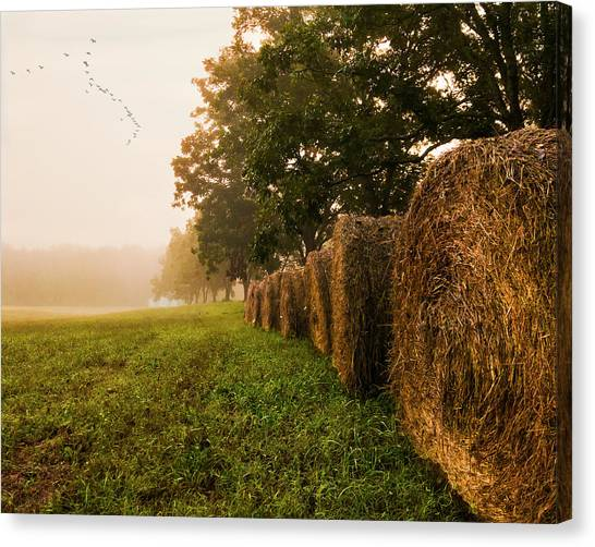 Country Morning Mist Canvas Print
