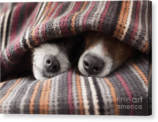 Happiness Canvas Print - Couple Of Dogs In Love Sleeping by Javier Brosch