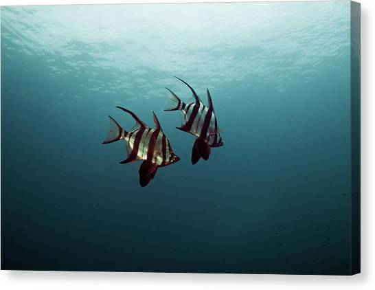 Couple Of Fish Canvas Print by Underwater Graphics
