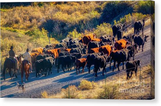Brown Ranch Trail Canvas Print - Cowboys Cattle And Colorado by Janice Pariza
