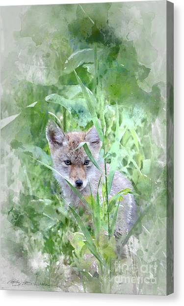 Coyote Pup Canvas Print