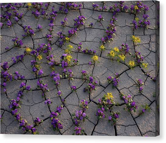 Cracked Blossoms II Canvas Print