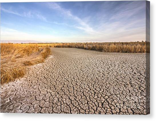 Clay Canvas Print - Cracked Dry Ground Near Fremont by Nvelichko
