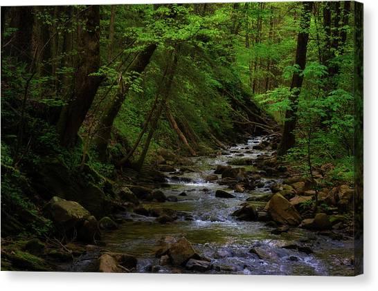 Creek Flowing Through Shady Forest Canvas Print