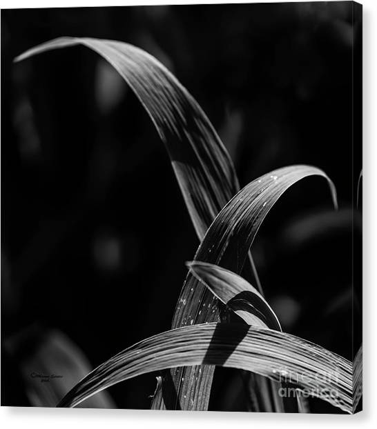 Daylily Canvas Print - Crossed In The Light by Marvin Spates