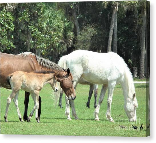 Cumberland Horses Family Portrait Canvas Print