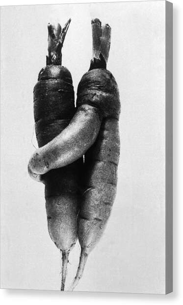 Curiosity  Lovely Carrots Canvas Print