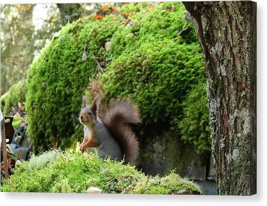 Curious Squirrel Canvas Print
