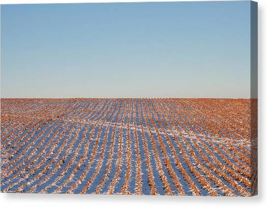 Corn Field Canvas Print - Cut Corn Rows by Todd Klassy