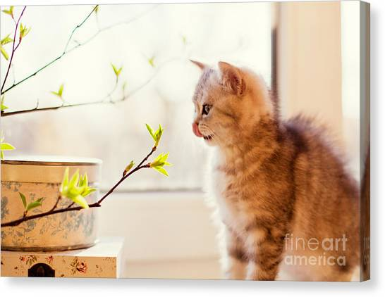 Purebred Canvas Print - Cute Little Kitty Playing With Green by Aprilante