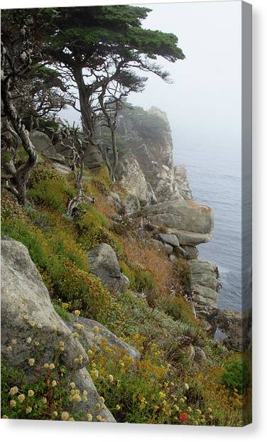 Cypress Cliff Canvas Print