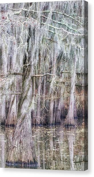 Cypress Dance - Jo Ann Tomaselli Canvas Print