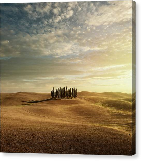 Cypress Trees In Tuscany Canvas Print by Peter Zelei Images