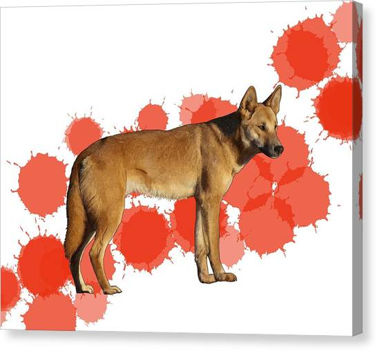 Canvas Print - D Is For Dingo by Joan Stratton