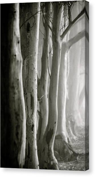 D0805 - Gumtrees Canvas Print