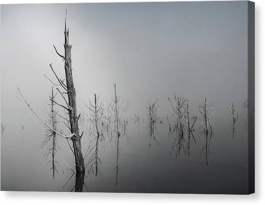 D1087 - Theewaterskloof Trees Canvas Print