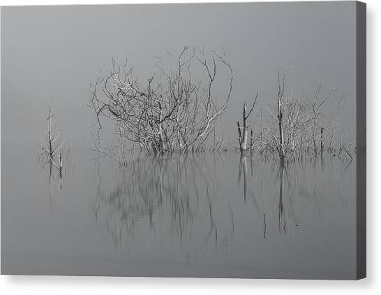 D1093 - Theewaterskloof Trees Canvas Print