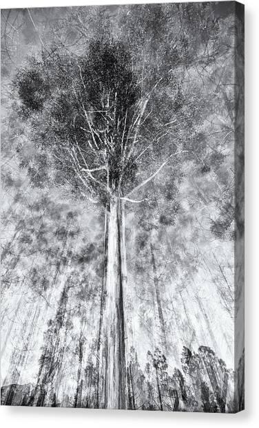 D1654p Canvas Print