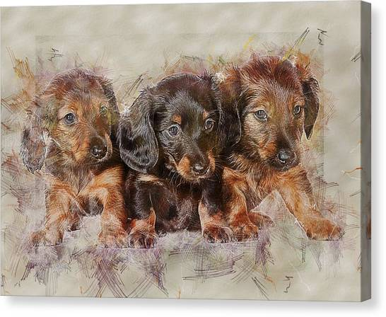 Watercolor Pet Portraits Canvas Print - Dachshund Three Puppies by ArtMarketJapan