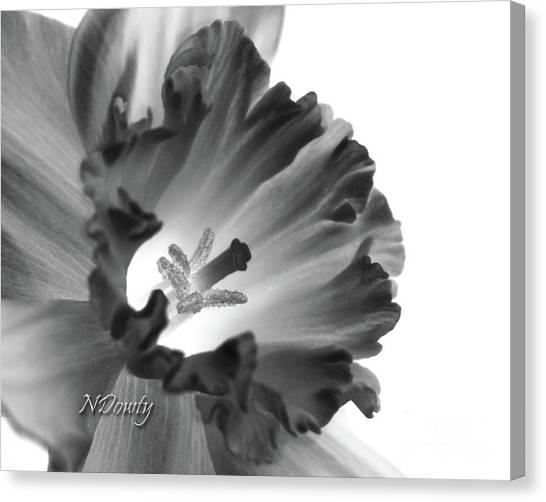 Daffodil Cornered Canvas Print