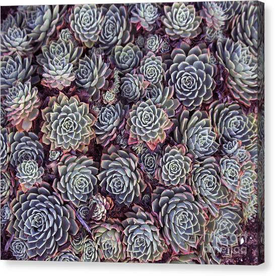 Basket Canvas Print - Dainty Succulents With Thick Skin Or by Alybaba