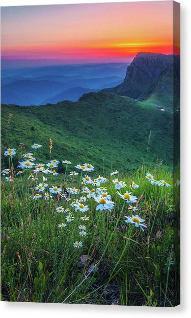 Daisies In The Mountain Canvas Print