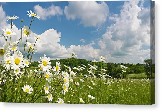 Daisy Meadow Summer Pastoral Canvas Print by Fotovoyager
