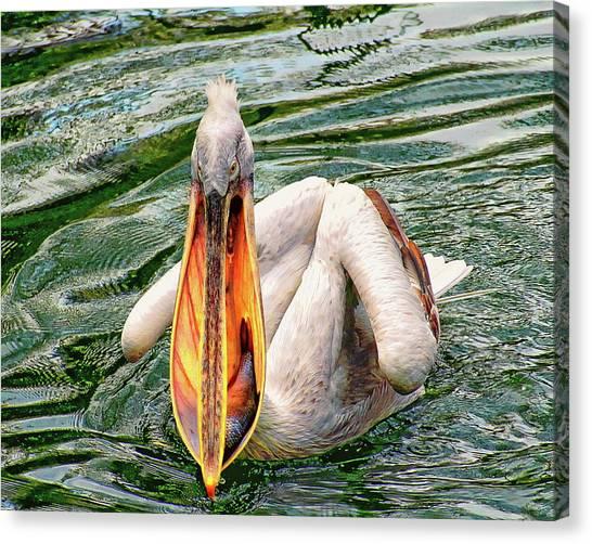 Canvas Print featuring the photograph Dalmatian Pelican by Anthony Dezenzio