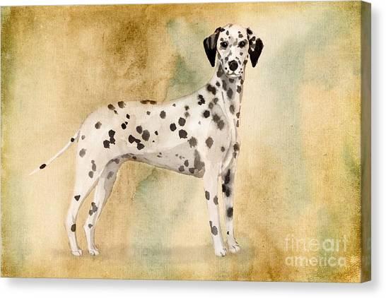 Purebred Canvas Print - Dalmation by John Edwards