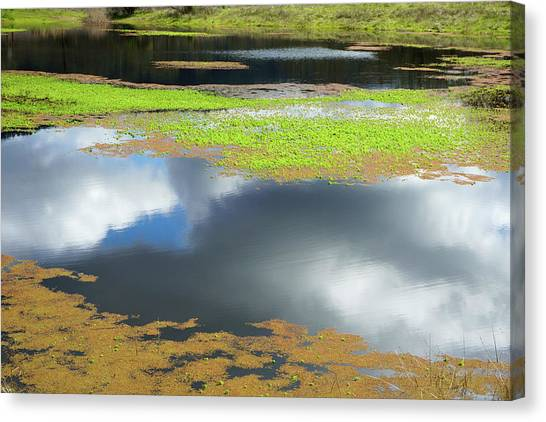 Damselfly Pond - 19 4497 Canvas Print