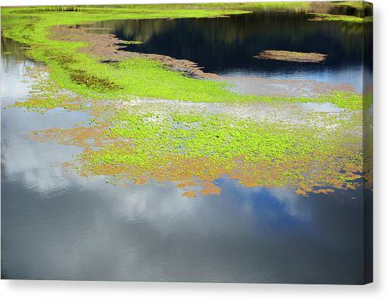 Damselfly Pond - 19 4503 Canvas Print