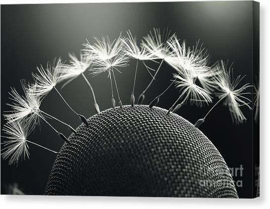 Stunning Canvas Print - Dandelion Seeds Macro by Kichigin