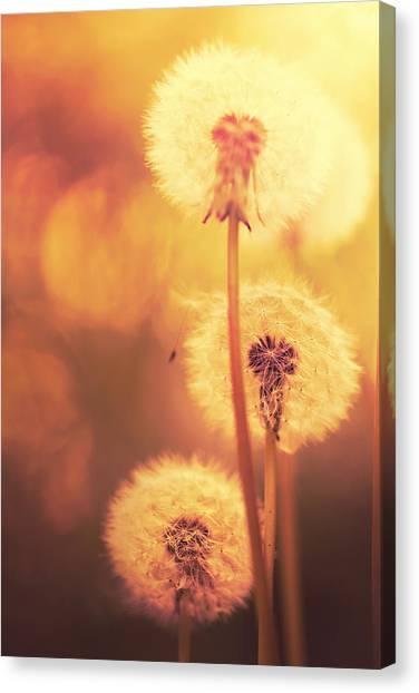Dandelion Summer Canvas Print by Lordrunar