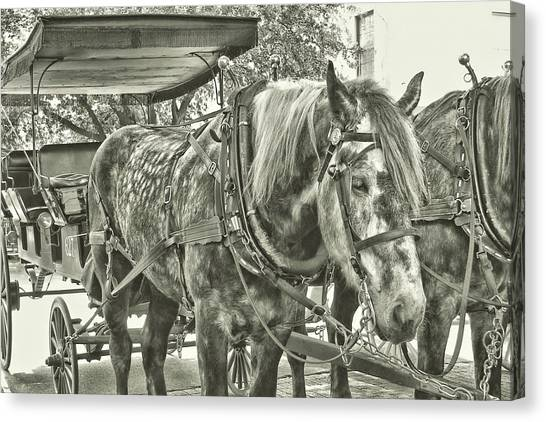 Canvas Print featuring the photograph Dapple Grey by JAMART Photography