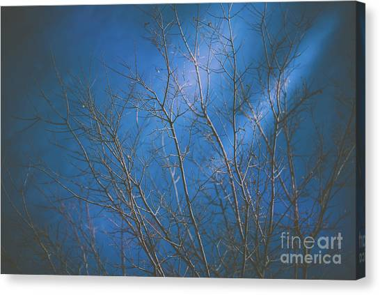 Dark Winter Canvas Print