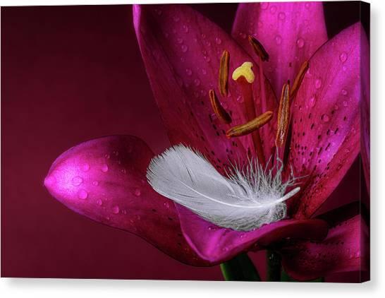Daylily Canvas Print - Daylily With Feather by Tom Mc Nemar