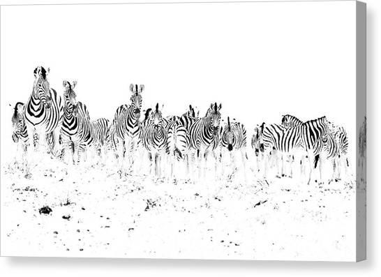 Dazzle Canvas Print
