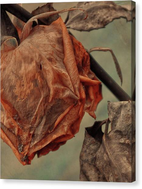 Canvas Print - Dead Rose by The Artist Project