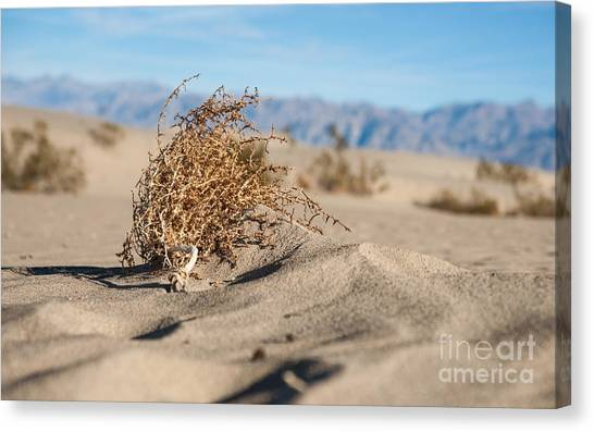 Bush Canvas Print - Dead Sagebrush Lies On Sand In Desert by Kenkistler