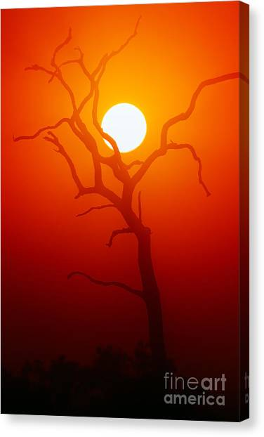 Dead Tree Silhouette With Dusty Sunset Canvas Print by Johan Swanepoel