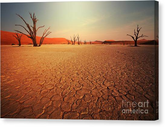 Cemetery Canvas Print - Dead Valley In Namibia by Galyna Andrushko